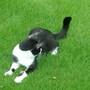 casper chasing his tail