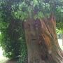 story tellers tree. clyne valley park garden swansea.