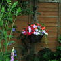 Hanging basket on North facing fence.