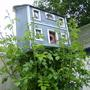 Birdhouse - Rose is growing fast
