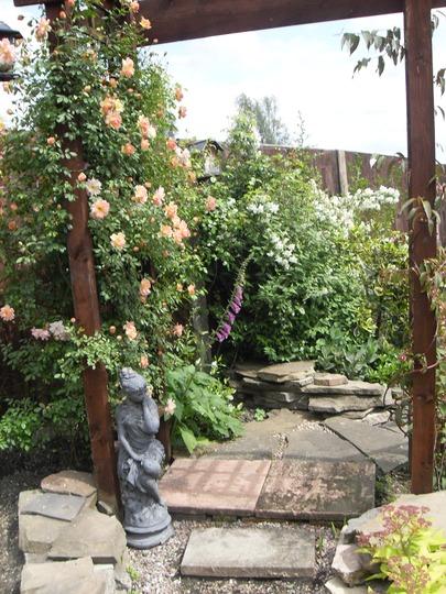 `Phyllis Bides` (Rosa filipes (Rambler rose))