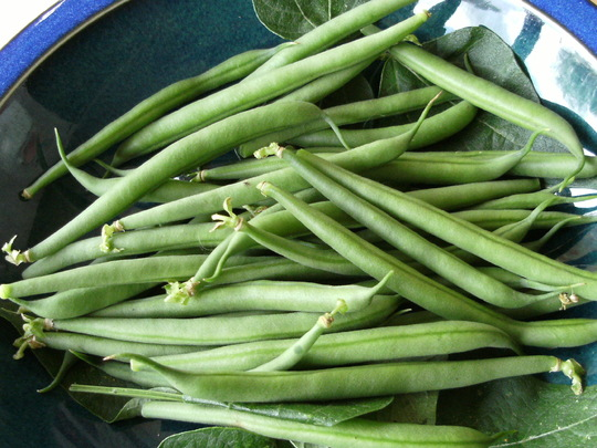 Dwarf French Beans
