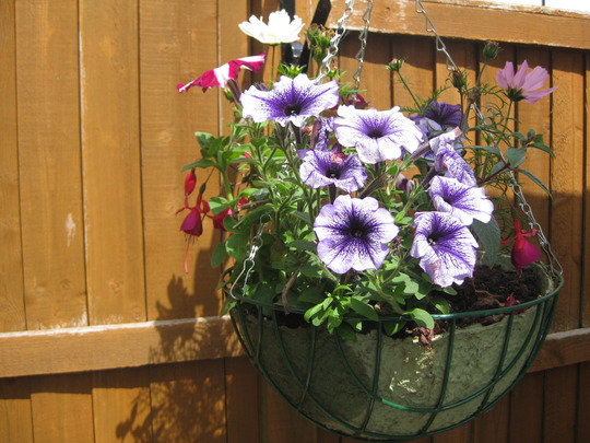 hanging basket with mix