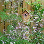 Bird House and Thalictrum