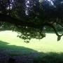 grass around by trees