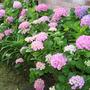 2010_Garden_080.jpg