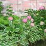 2010_Garden_082.jpg