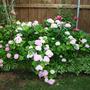 2010_Garden_083.jpg