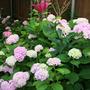 2010_Garden_084.jpg