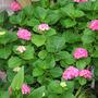 2010_Garden_086.jpg