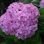 2010_Garden_088.jpg
