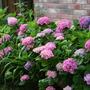 2010_Garden_096.jpg