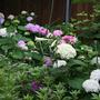 2010_Garden_097.jpg