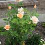 2010_Garden_098.jpg