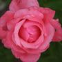 2010_Garden_103.jpg