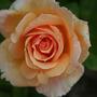 2010_Garden_104.jpg