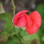 2010_Garden_105.jpg
