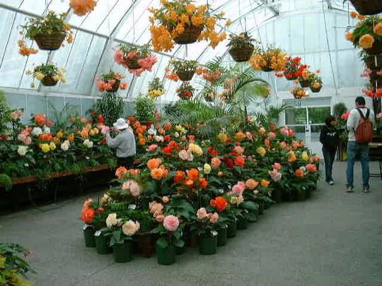 Begonia house Christchurch NZ