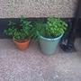 herbs.jpg (Herbs)