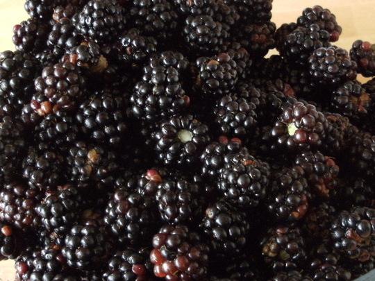 Blackberries ...