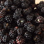 Blackberries ...