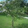 plum_trees_2010_004.jpg