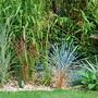 Grass border. (Elymus magellanicus)
