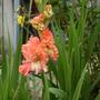 Garden_032