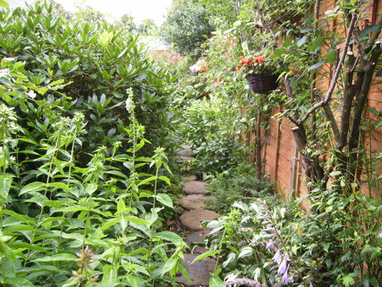 Back path jungle