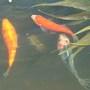 Fishies_005