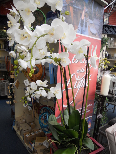 How much for this artificial orchid?