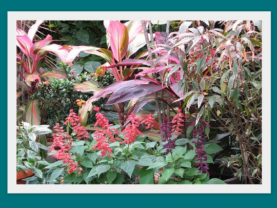 End-of-Winter Downunder:  Pinks/Purples in the Courtyard Garden