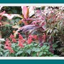 Courtyard_garden_pinks