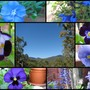 End-of-Winter Downunder:  Blue Winter Sky and Blue Blooms
