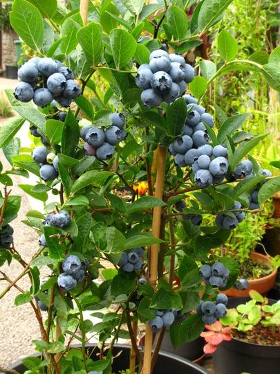 Blueberries never been so good