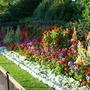 Summer in Regent's Park