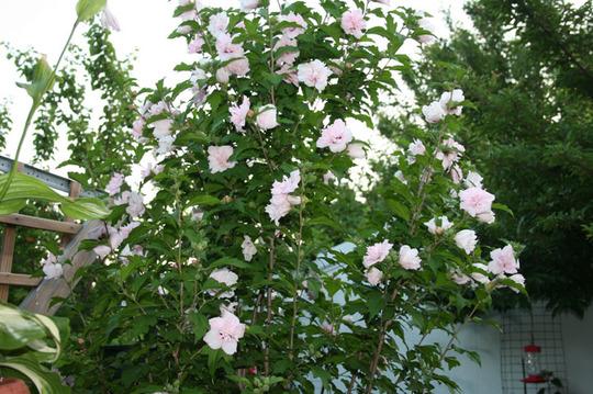 2010_Garden_159.jpg
