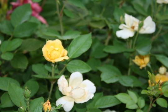 2010_Garden_163.jpg