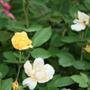 2010_garden_163