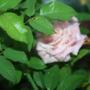 2010_garden_164