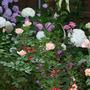 2010_garden_166