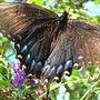 Butteerfly_003_opt_opt