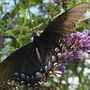 Butteerfly_004_opt
