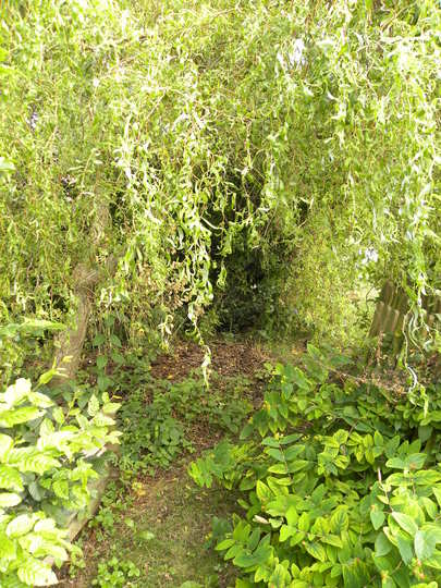 horse manure under willow  -290710