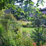 Garden_9aug10_009