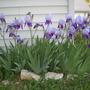 Spring_2008_6