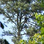 Eagle at Lansford