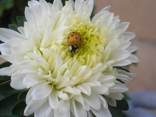 Aster with visitor