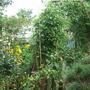 Pat_s_garden_Aug_2010_003.jpg