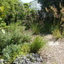 Dry garden with grasses in Waterperry Gardens